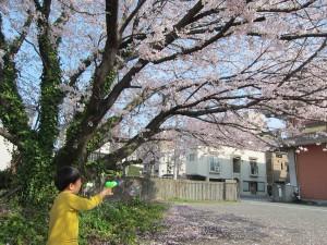 心温と桜とシャボン玉3
