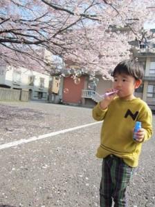 桜は散ってしまいましたが・・・「心温と桜とシャボン玉」